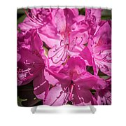 Rhododendron-close Up1 Shower Curtain