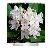 Rhododendron Family Of Flowers Shower Curtain