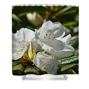 Rhododendron I Shower Curtain