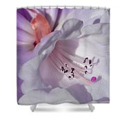 Rhododendron In White And Magenta Shower Curtain
