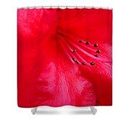 Rhododendron Macro Red Rhodie Art Print Baslee Troutman Shower Curtain