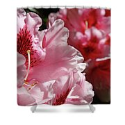 Rhododendrons Art Prints Floral Pink Rhodies Canvas Baslee Troutman Shower Curtain