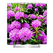 Rhododendrons In Bloom Shower Curtain