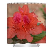 Rhododendrum Oldhamii Shower Curtain