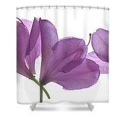 Rhody Ballet-pink Shower Curtain