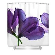 Rhody Ballet-purple Shower Curtain