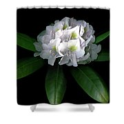 Rhody Queen - White Shower Curtain