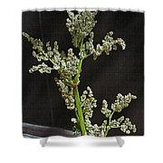 Rhubarb Blossoms Shower Curtain