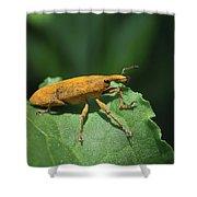 Rhubarb Weevil Shower Curtain