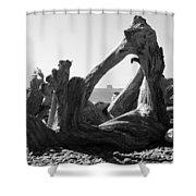 Rialto Beach Cake Rock Driftwood Shower Curtain