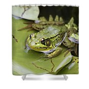 Ribbet In The Pond Shower Curtain