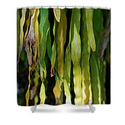 Ribbons Of Green Shower Curtain