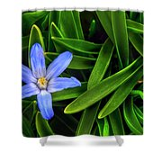 Ribbons Of Spring Shower Curtain