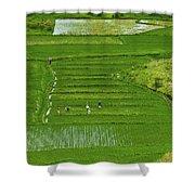 Rice Fields Shower Curtain