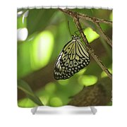 Rice Paper Butterfly Clinging To A Tree Branch Shower Curtain