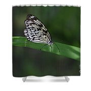 Rice Paper Butterfly On A Long Daylily Leaf Shower Curtain