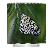 Rice Paper Butterfly Sitting On Green Foliage Shower Curtain