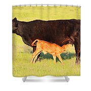 Rich And Creamy Snack 2 Shower Curtain