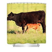 Rich And Creamy Snack  Shower Curtain