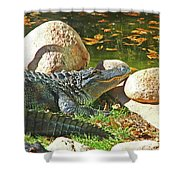 Richly Hued Colorado Gator On The Rocks 2 10282017 Shower Curtain