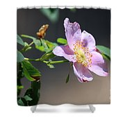 Rimrock Rose Shower Curtain
