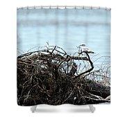 Ring Billed Gull Shower Curtain