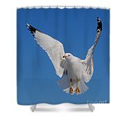 Ring Billed Gull In Flight Shower Curtain by Mircea Costina Photography