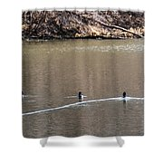 Ring-necked Duck Formation Shower Curtain