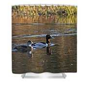 Ring Necked Duck Shower Curtain