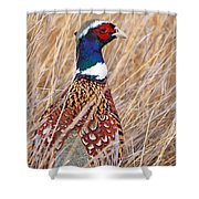 Ring-necked Pheasant  Shower Curtain