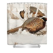 Ring-necked Pheasant Hunting In The Snow Shower Curtain