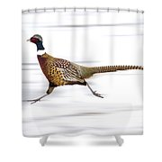 Ring Necked Pheasant Shower Curtain