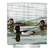 Ring-necked Trio Shower Curtain