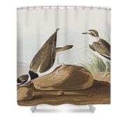 Ring Plover  Shower Curtain