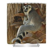 Ring Tail  Shower Curtain