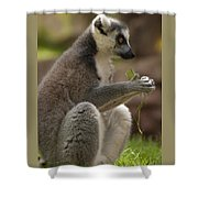 Ring-tailed Lemur Holding A Clump Of Grass Shower Curtain