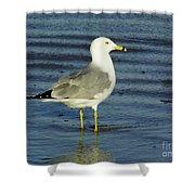 Ringed Billed Sea Gull Shower Curtain