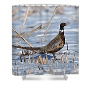 Ringneck Pheasant Rooster In Snow Shower Curtain