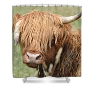 Ringo - Highland Cow Shower Curtain