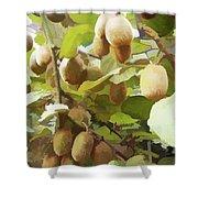 Ripe Kiwi Fruit On The Branch Shower Curtain