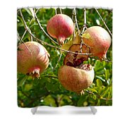Ripe Pomegranates Shower Curtain