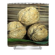 Ripe Walnuts Shower Curtain