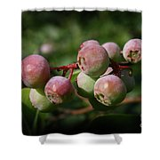 Ripening Shower Curtain