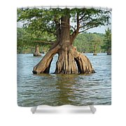 Ripley Tennessee Cypress Shower Curtain