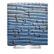 Ripples Of Sand Dotted With Plovers Shower Curtain