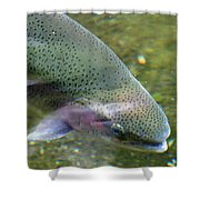 Rising Shower Curtain