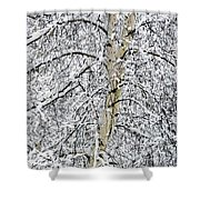 Rising Majesty Shower Curtain