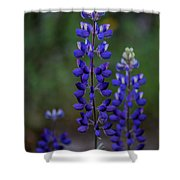 Rising To The Occasion Shower Curtain