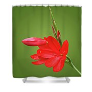 Ritzy Red Shower Curtain