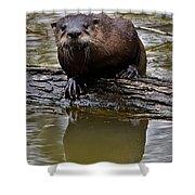 Rive Otter Shower Curtain